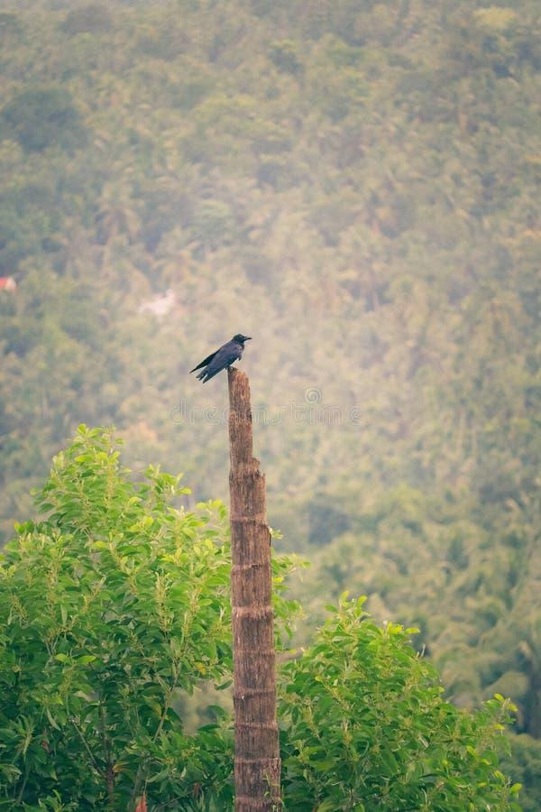 Bird resting in a wooden post. Black bird resting on a wooden post in a forest in the middle of green royalty free stock photo