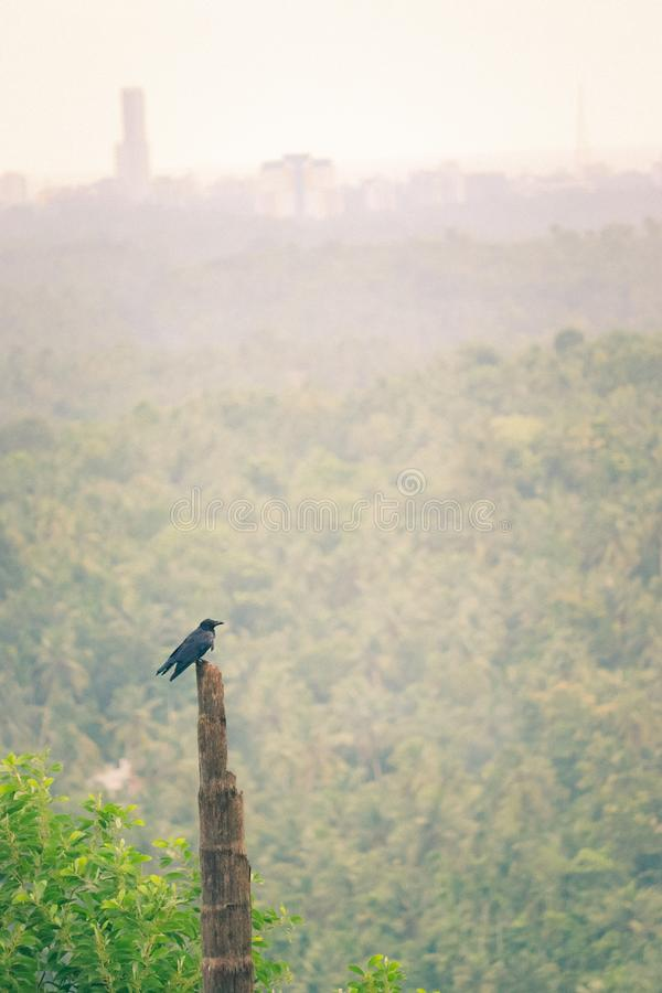 Bird resting in a wooden post. Black bird resting on a wooden post in a forest in the middle of green royalty free stock image