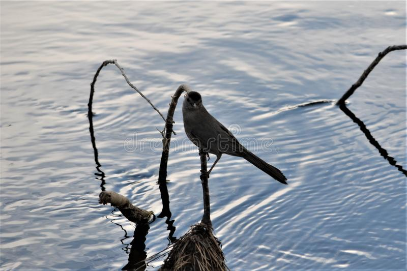Bird Liveing on A River. royalty free stock photo