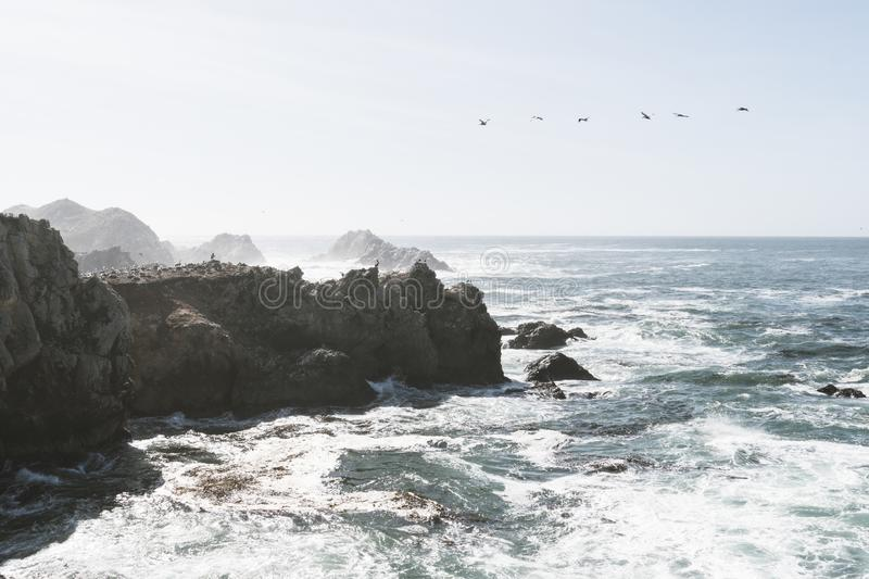 Bird Rock in Point Lobos State Reserve Park in Monterey California on a sunny, yet hazy day. Birds such as pelicans and seagulls royalty free stock photos