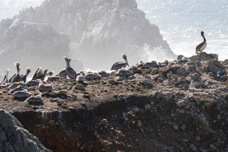 Bird Rock in Point Lobos State Reserve Park in Monterey California on a sunny, yet hazy day. Birds such as pelicans and seagulls. Mate royalty free stock photography