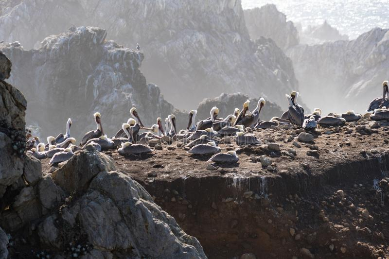 Bird Rock in Point Lobos State Reserve Park in Monterey California on a sunny, yet hazy day. Birds such as pelicans and seagulls. Mate stock image