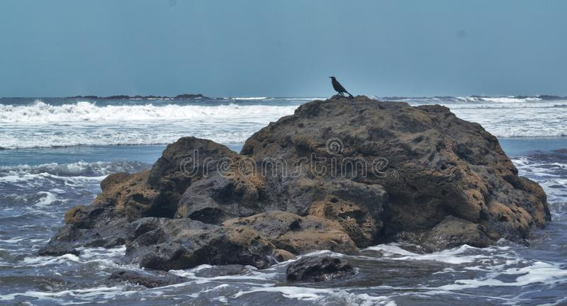 Bird on the Rocks stock images