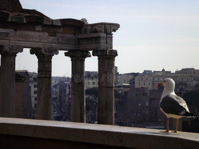 Bird in Rome royalty free stock images