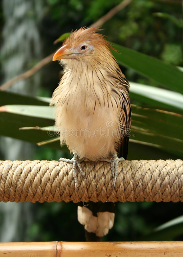 Bird on Rope. A bird takes a rest from flying and sits on the rope of a rope bridge royalty free stock photography