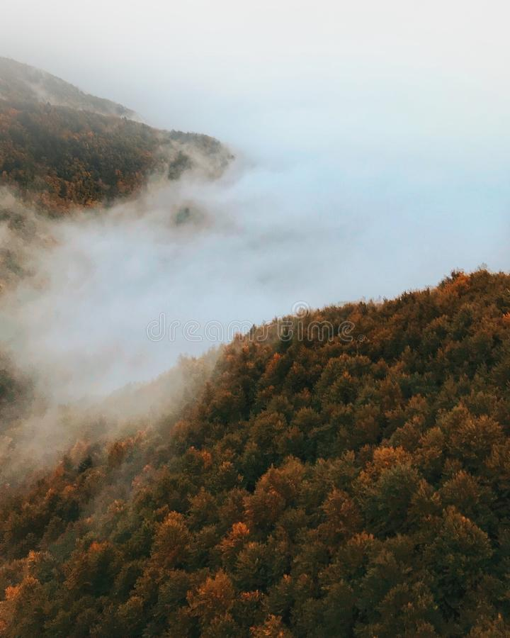 Bird's Eye Photography of Foggy Forest royalty free stock photography