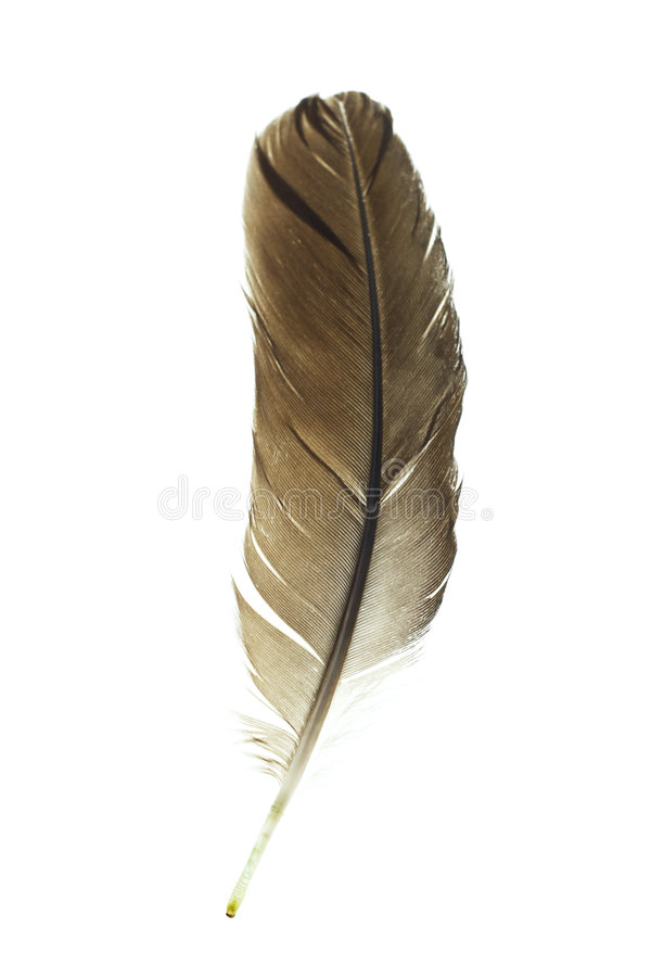 Download Bird's Feather Royalty Free Stock Photography - Image: 6662827