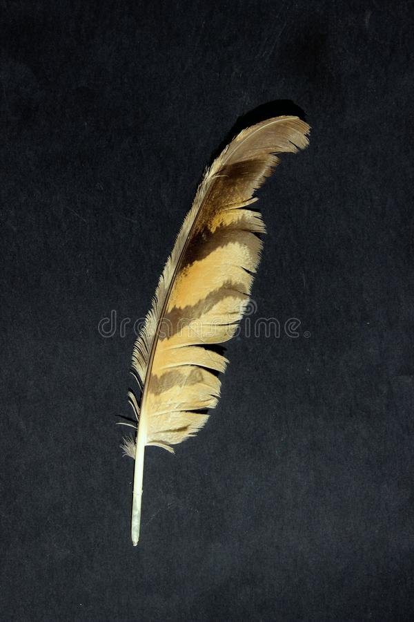 Bird`s feather on a black background. Nature, birds concept. royalty free stock photography
