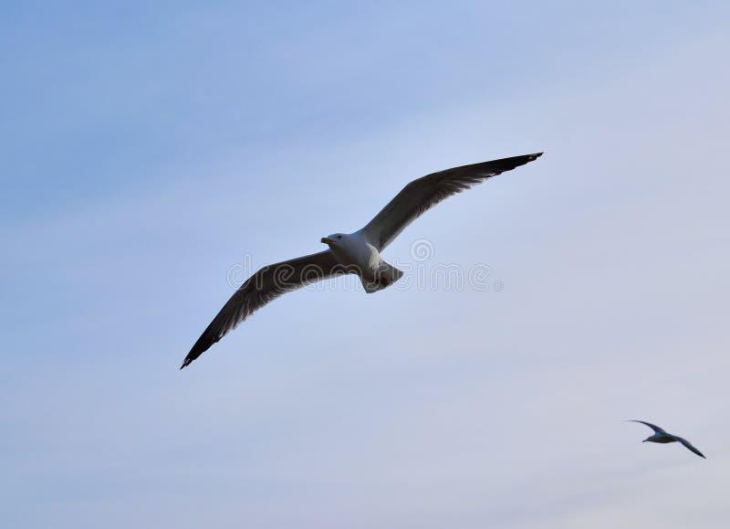 Bird& x27;s fly stock photos