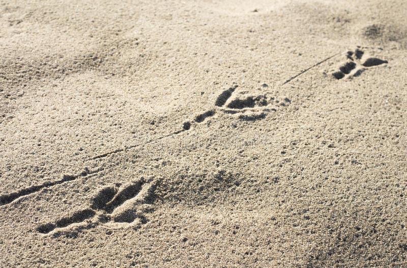 Download Bird's footprint stock photo. Image of dune, summer, beach - 36980792