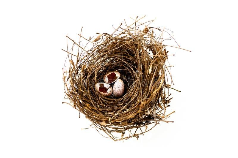 Download Bird's nest stock image. Image of easter, springtime - 24130555