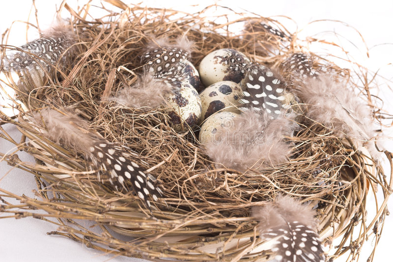 Download Bird's nest stock image. Image of feather, animal, nature - 518981