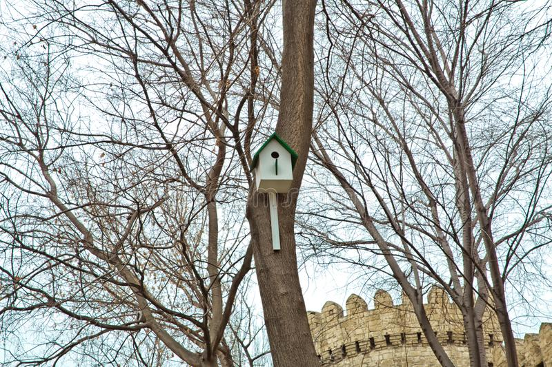 he bird house is made of handmade wood, so that the bird can naturally come to live. Squirrel's house on the trees at public park royalty free stock photo
