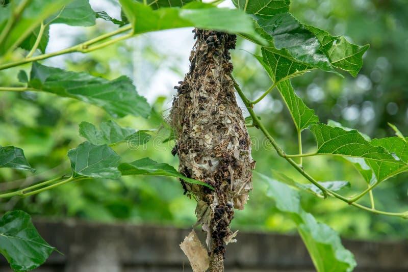 Bird`s nest building to hide from predators. The bird`s nest building to hide from predators stock photos
