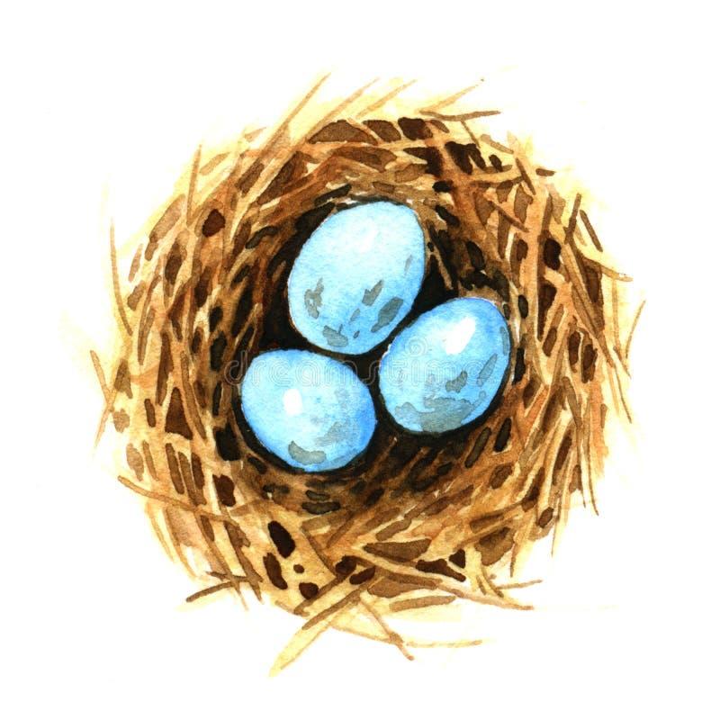 Bird's nest with eggs vector illustration