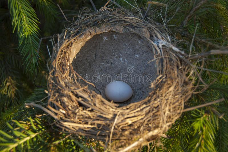 Bird`s nest, flooded with sunlight, with egg inside stock image