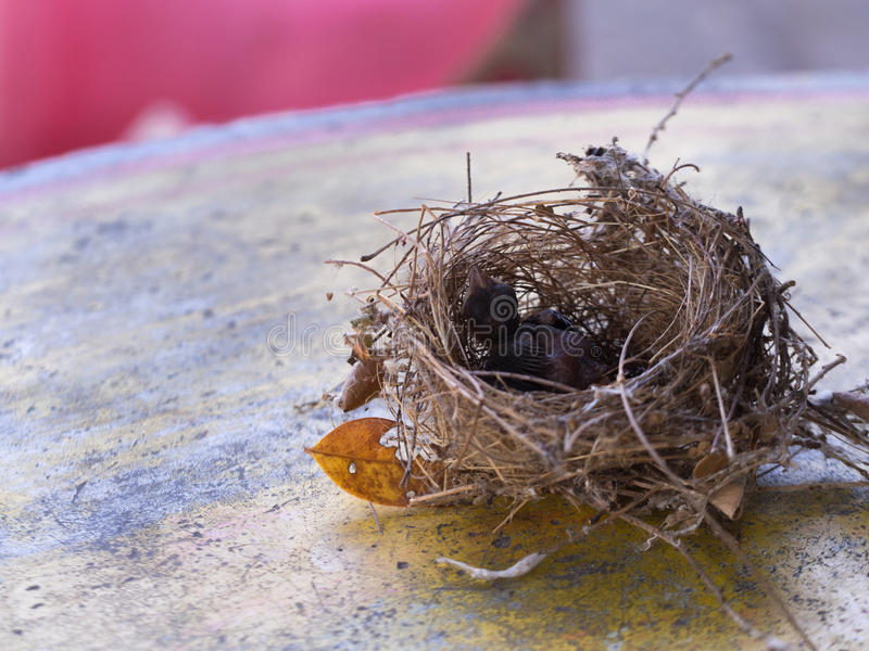 Bird`s Nest and Little Bird. Fell on The Table royalty free stock photography