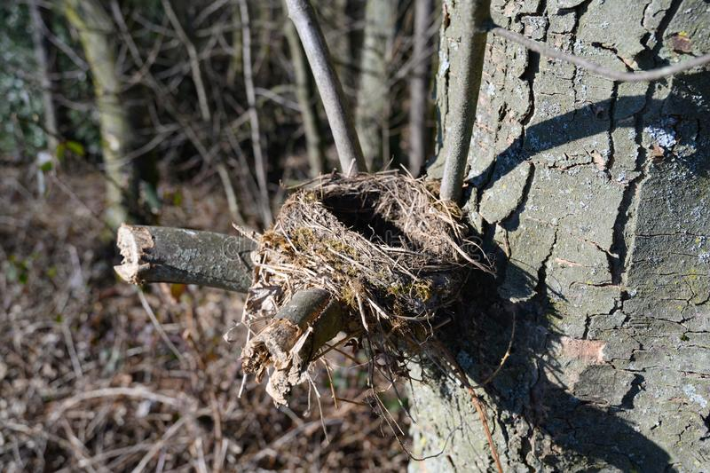 Bird`s nest in spring forest Empty nest in branch furcation stock images