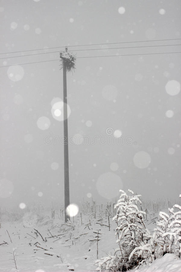The bird's nest, the telegraph pole and the snow stock images