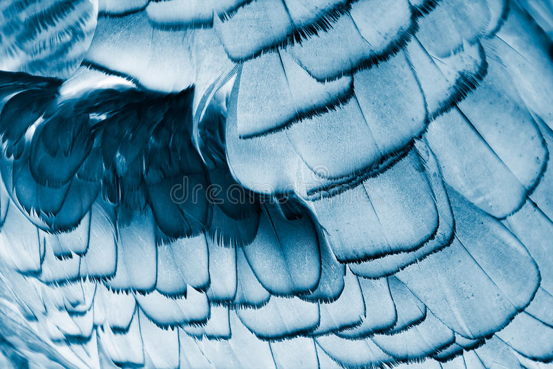 Bird's plumage background royalty free stock image