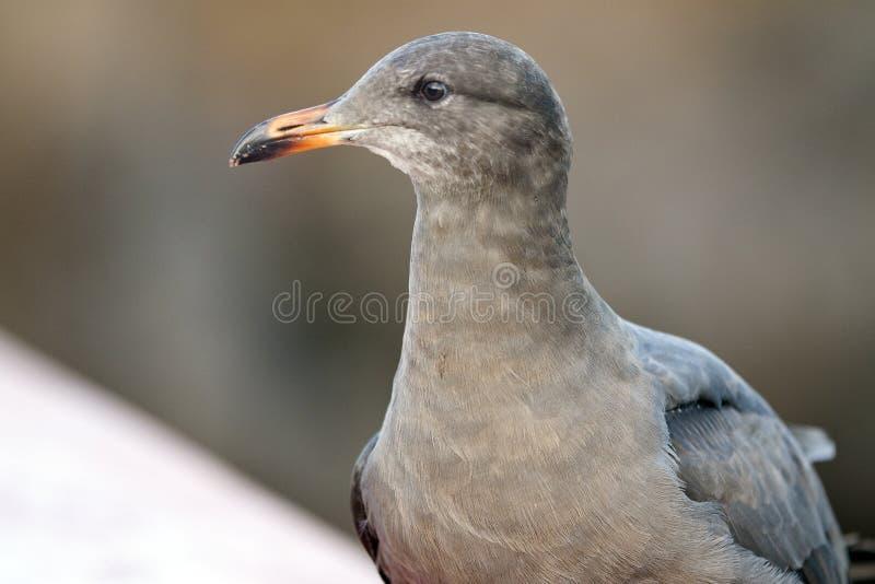 A Bird's Portrait stock images