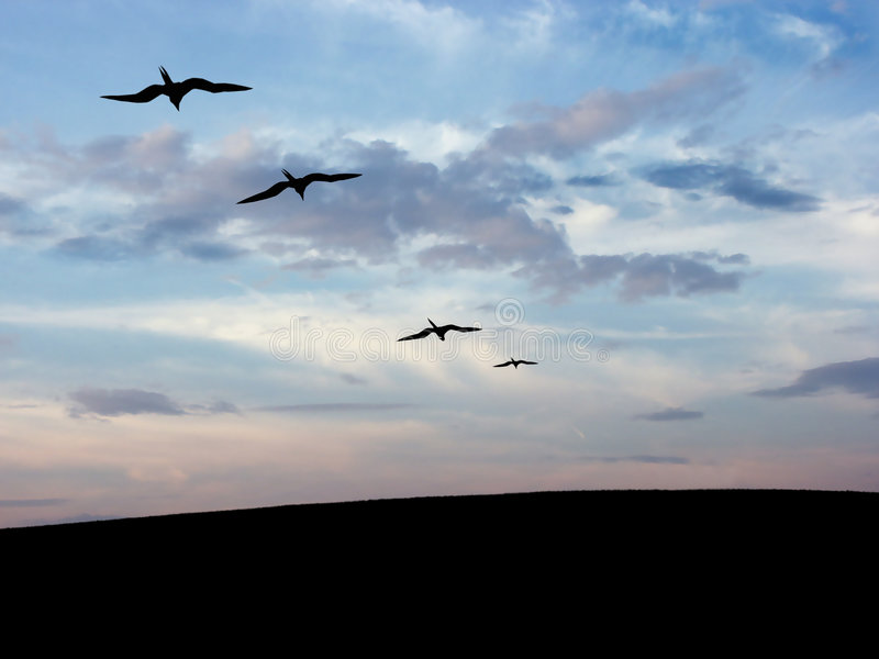 Download Bird's silhouette stock image. Image of happiness, emotion - 472237