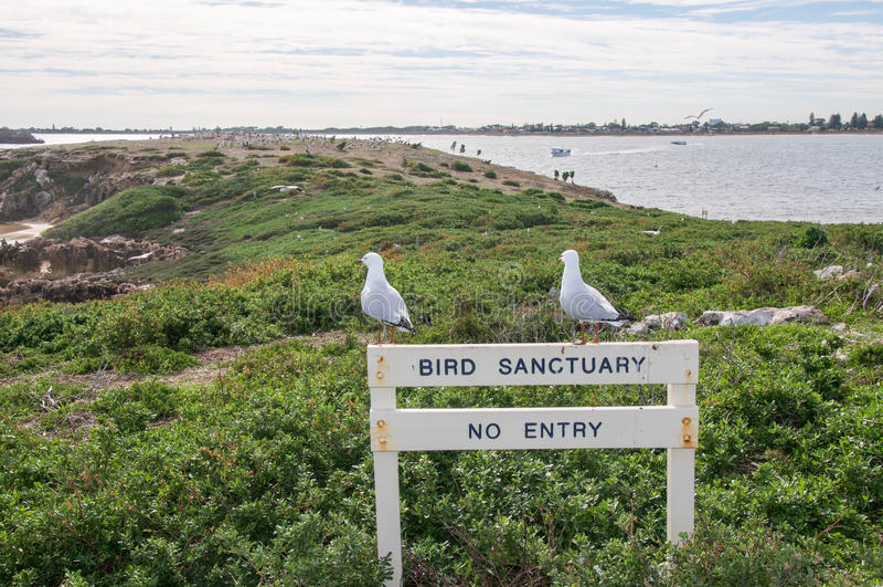 Bird Sanctuary royalty free stock photo