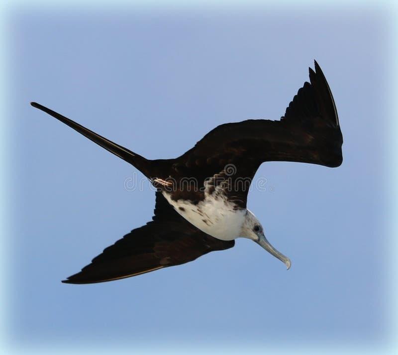 Bird of the sea stock photography