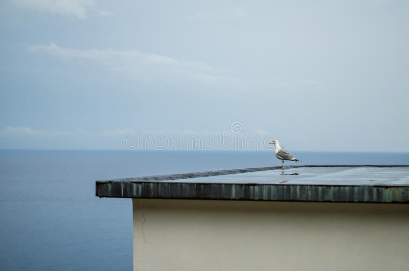 Bird, sea and blue sky royalty free stock photos