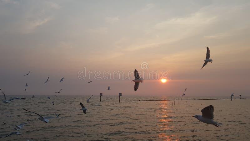 Bird sea and sun royalty free stock photo