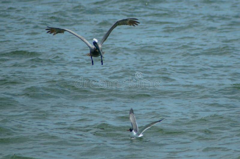 Bird, Seabird, Fauna, Sea Free Public Domain Cc0 Image