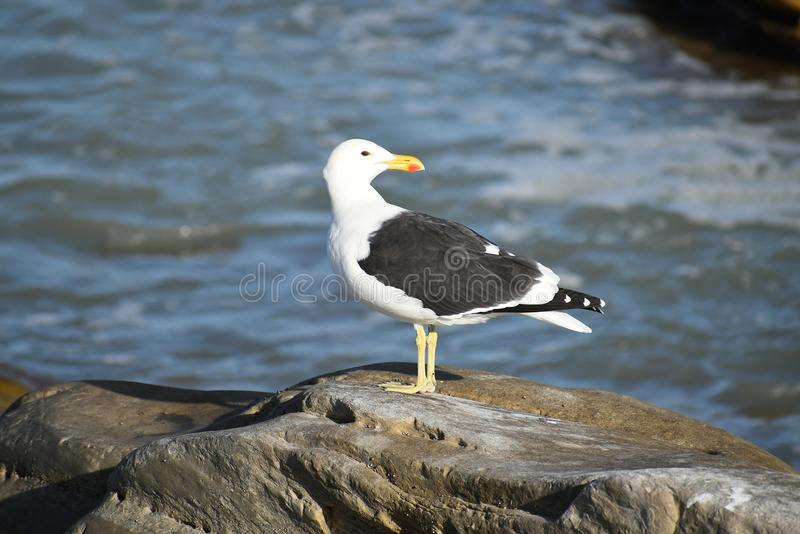 Bird, Seabird, Gull, Beak Free Public Domain Cc0 Image