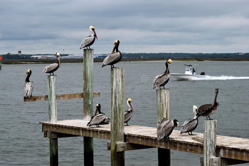 Bird, Seabird, Pelican, Water Free Public Domain Cc0 Image