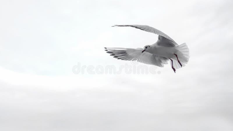 Bird, Seabird, Sky, Beak Free Public Domain Cc0 Image