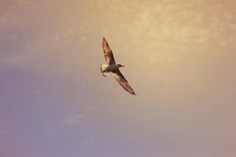 Bird seagull flying over sky stock images