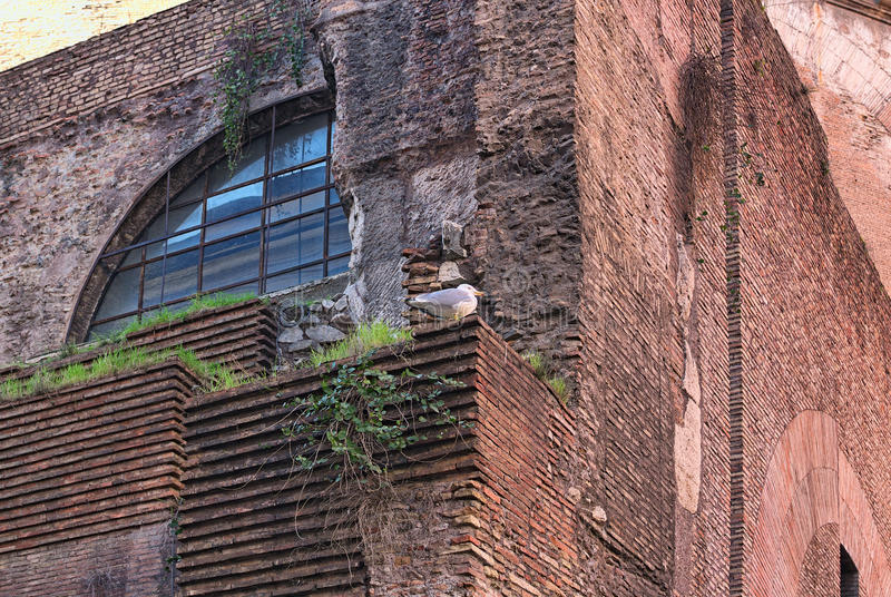 Bird seagull is sitting on the old brick wall of the abandoned house. Rome. Italy.  stock photography