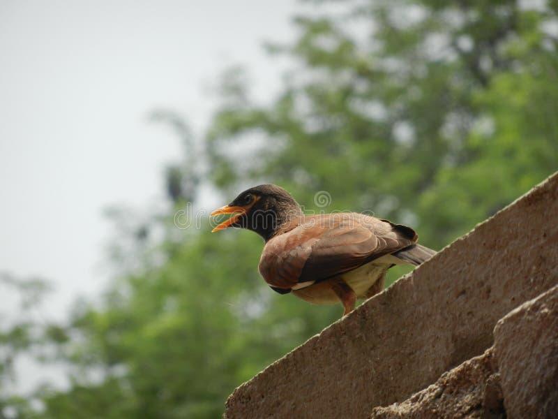 Hungry bird royalty free stock image