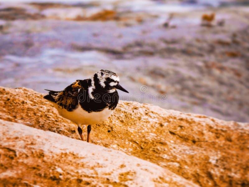 Bird at the seaside royalty free stock photos