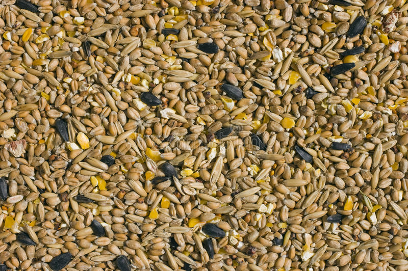what seeds are in bird seed