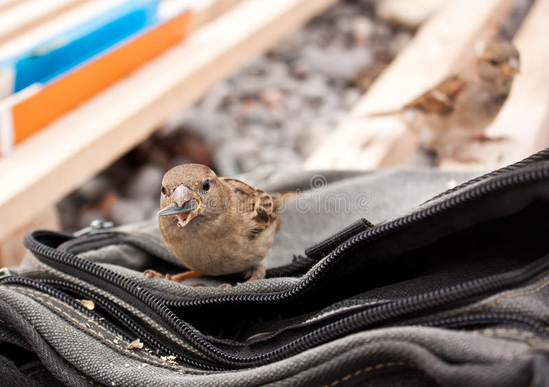 Download Bird With A Seed In Its Beak Stock Image - Image: 28190155