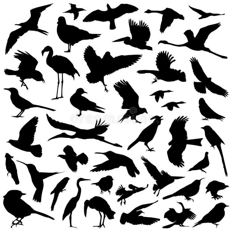 Bird set royalty free illustration