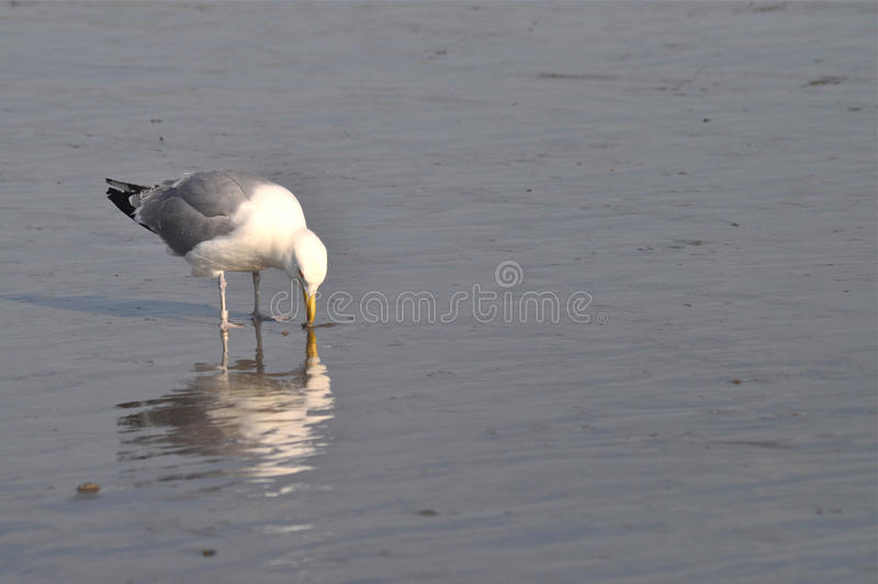 Download Bird on Shore stock image. Image of ground, wildlife - 23080195