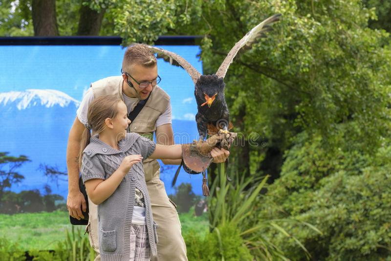 Bird show with Bateleur Eagle. Predatory bird from Africa. A little girl in leather glove takes an eagle. Leisure for a family royalty free stock images