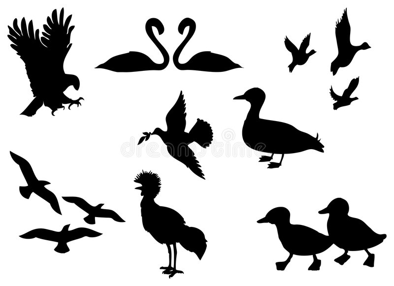 Bird Silhouette. Duck eagle illustration