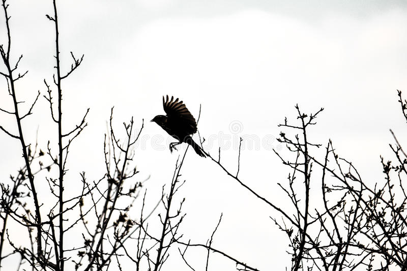 Bird Silhouette royalty free stock images