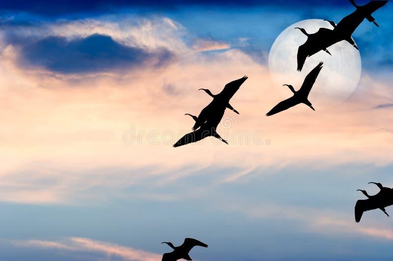 Bird Silhouette Flying stock photo