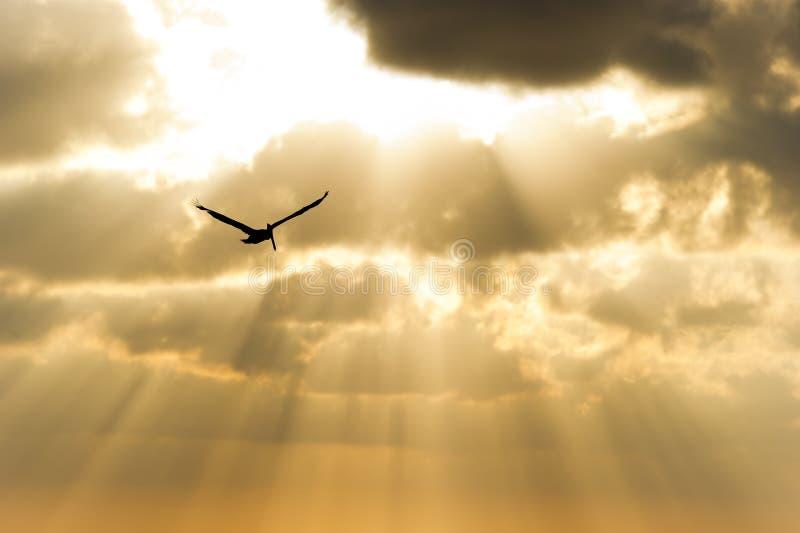 Bird Silhouette stock photography