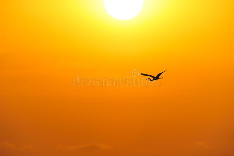 Bird Silhouette stock photos