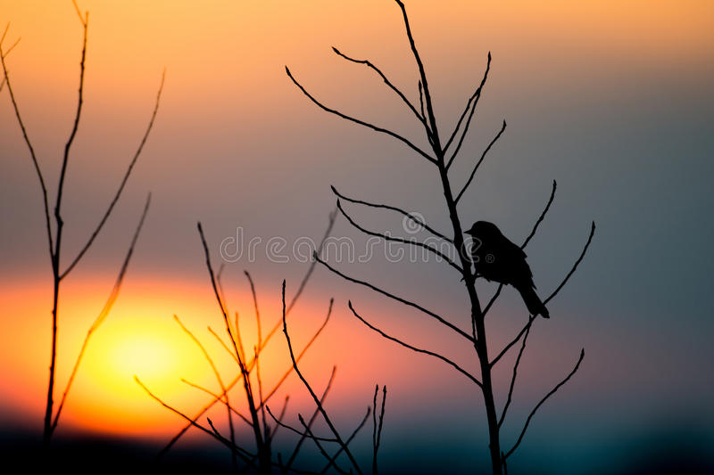 Download Bird silhouette at sunset stock image. Image of perched - 34252563