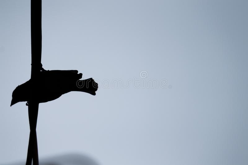 Bird Silhouette on wire against blue sky stock image